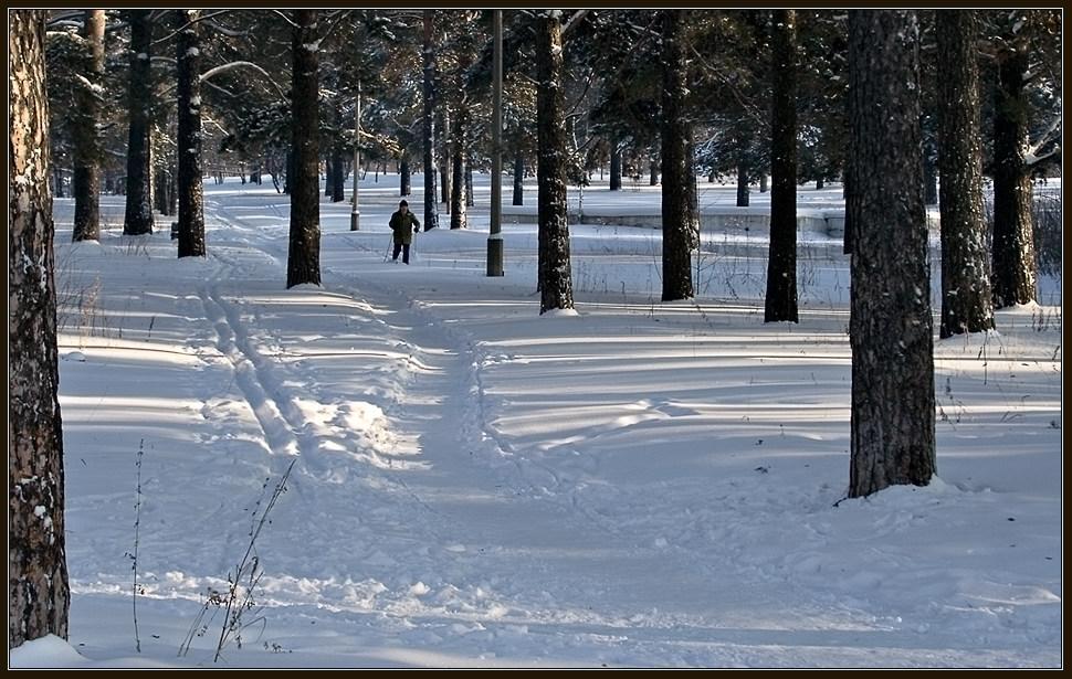 """фото """"Первопроходец :)"""" метки: пейзаж, зима, лес"""