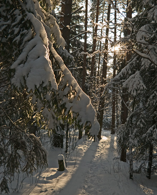 "photo ""At last snow and sun"" tags: landscape, forest, winter"