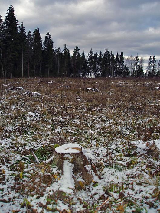 """фото """"Через пень-колоду"""" метки: пейзаж, осень"""
