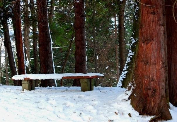 "фото ""Тишина"" метки: пейзаж, лес"