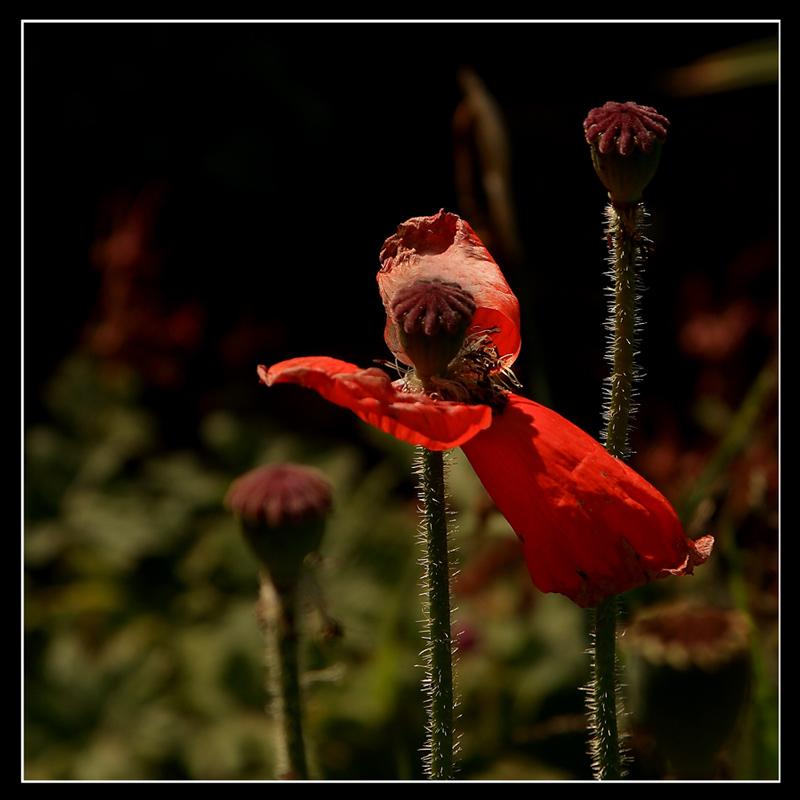 """фото """"А мне летать охото!"""" метки: природа, цветы"""