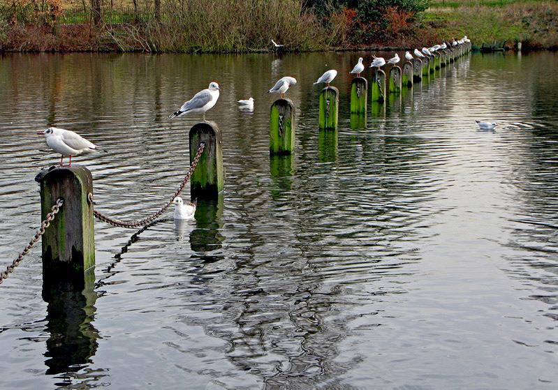 "фото ""Gull waiting for the place"" метки: путешествия, Европа"