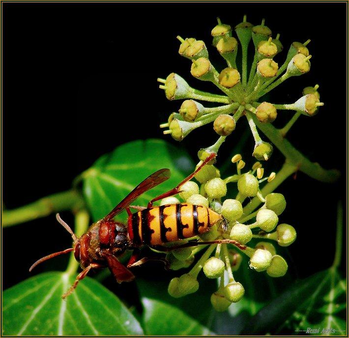 """фото """"good food"""" метки: природа, макро и крупный план, насекомое"""
