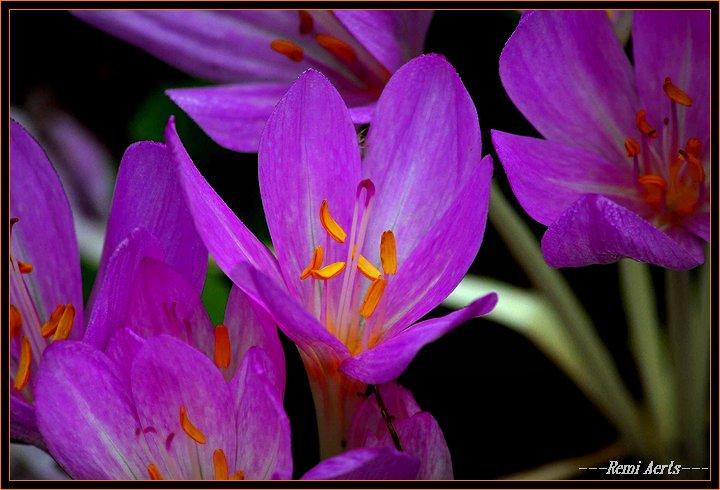 """фото """"the first ?"""" метки: природа, макро и крупный план, цветы"""