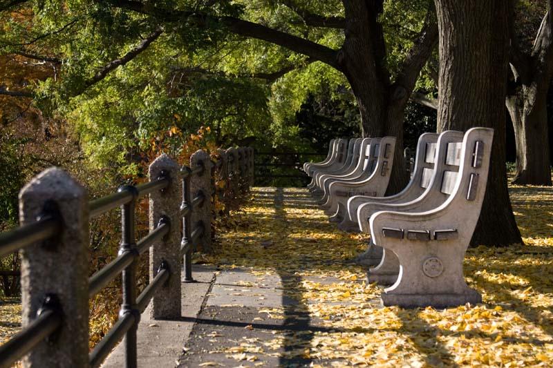 """фото """"Ботанический сад 2"""" метки: город,"""