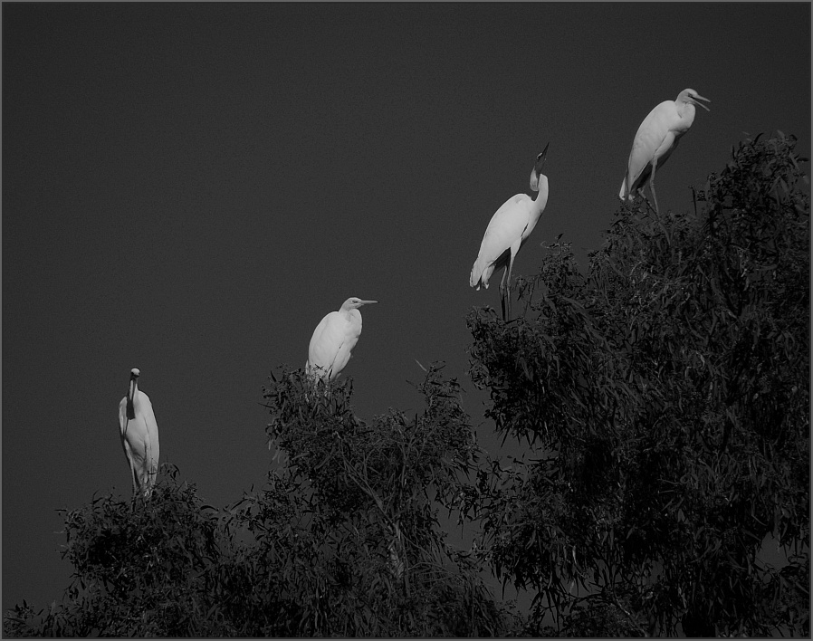 "photo ""Quartet"" tags: nature, wild animals"