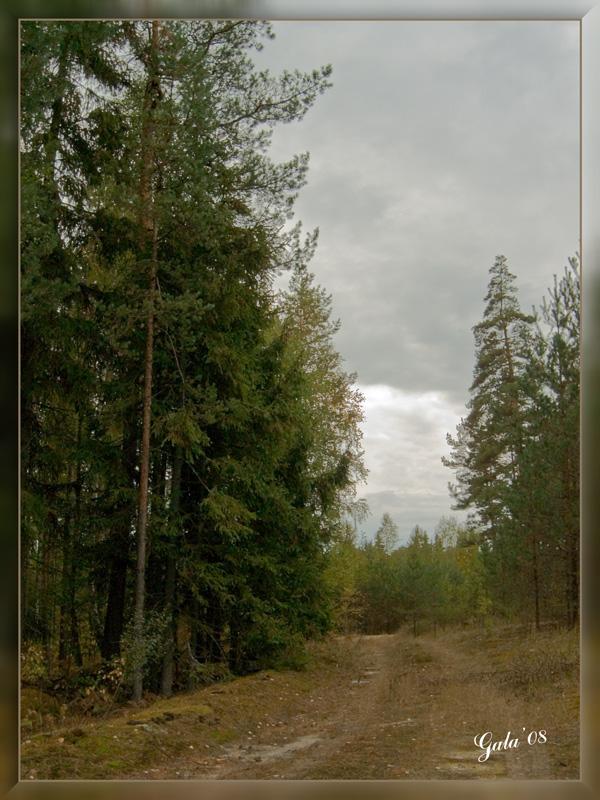 """фото """"Осень. Перед дождем"""" метки: пейзаж, лес, осень"""