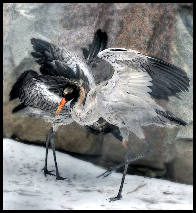 "photo ""Winter Dance"" tags: genre, nature, wild animals"