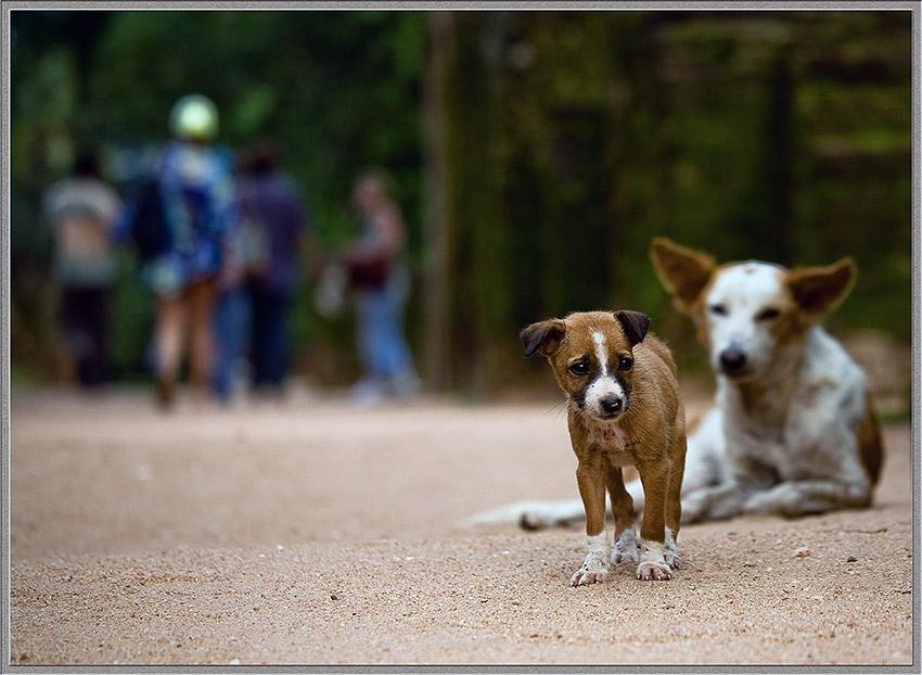 """фото """"Не играют..."""" метки: природа, жанр, домашние животные"""