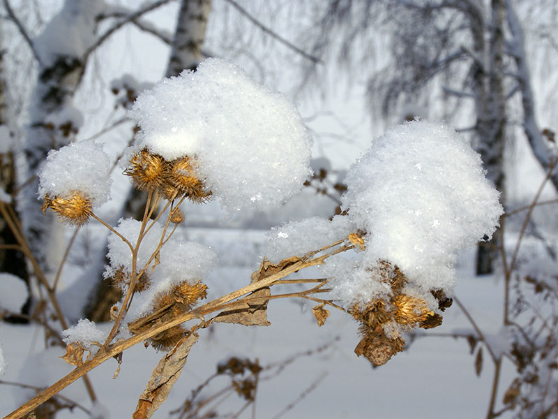 "фото ""Зимние наряды"" метки: ,"