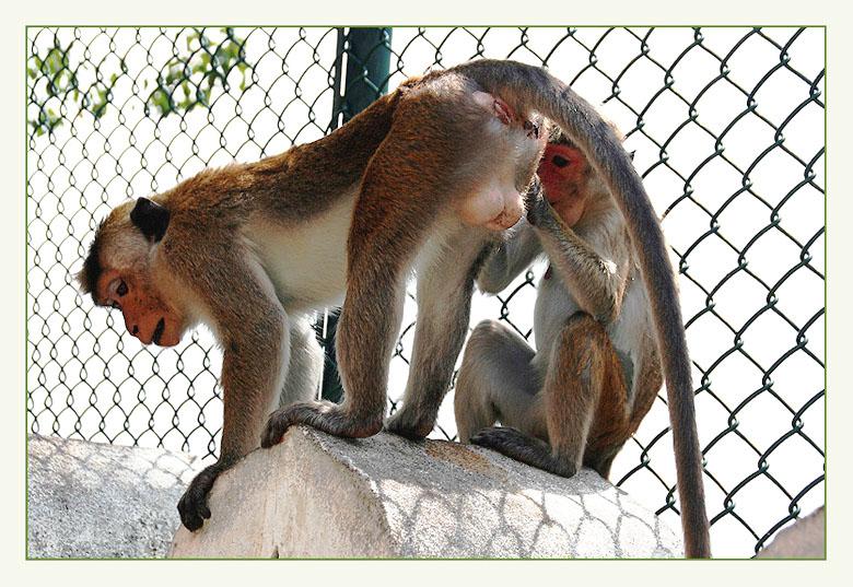"""фото """"Я всегда буду заботиться о тебе! :-)"""" метки: природа, путешествия, Азия, дикие животные"""