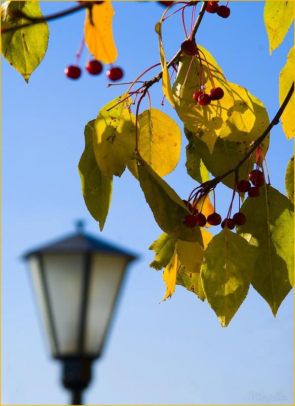 """фото """"Мотив"""" метки: пейзаж, фрагмент, осень"""