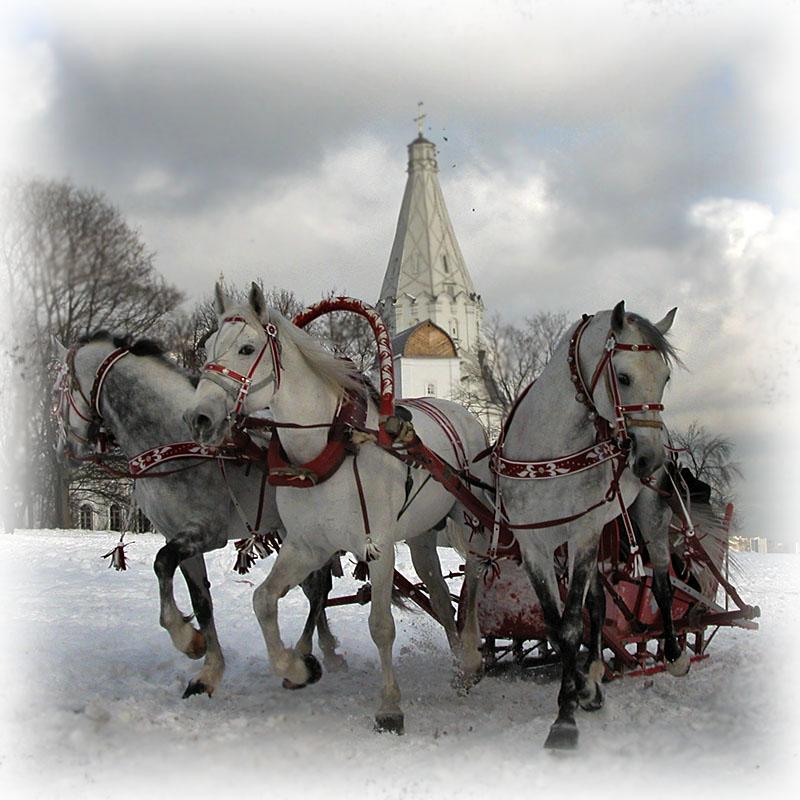 """фото """"Тройка"""" метки: пейзаж, природа, домашние животные, зима"""
