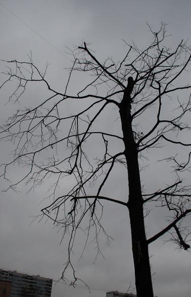 """фото """"И деревья тянут руки серые ко мне.."""" метки: архитектура, пейзаж, зима"""