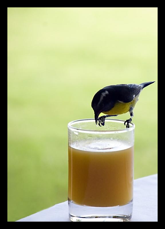 "photo ""Breakfast"" tags: nature, pets/farm animals, wild animals"