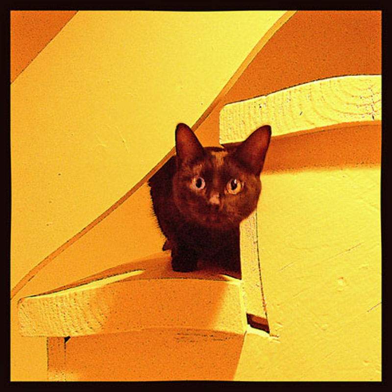 "photo ""Cat on steps"" tags: montage, nature, pets/farm animals"