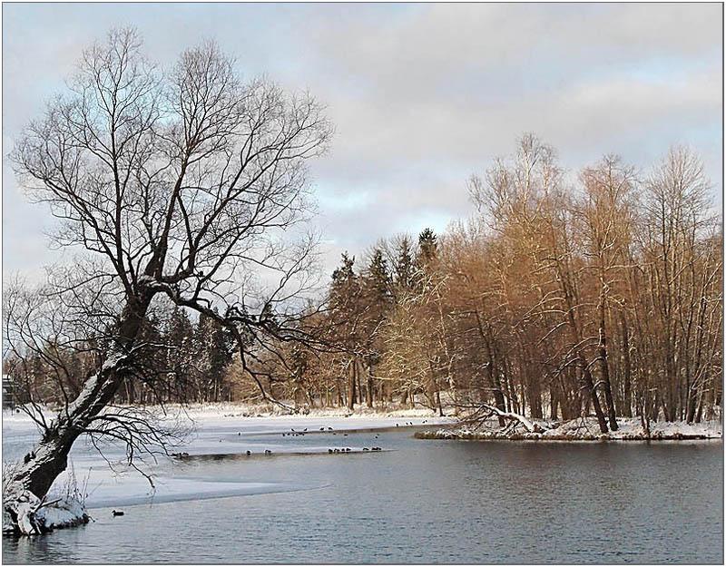 """photo """"The park 3"""" tags: landscape, winter"""