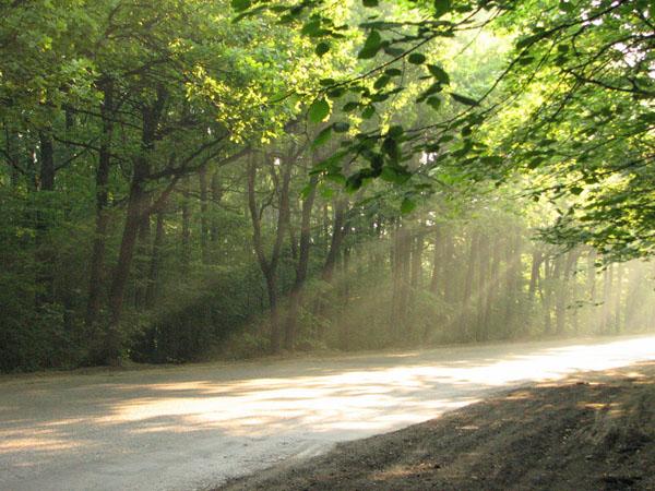 "фото ""Лесная дорога"" метки: пейзаж, лес, лето"