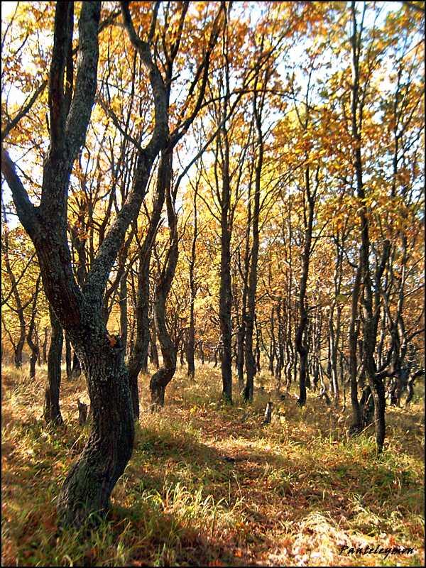 """фото """"танец дубов"""" метки: пейзаж, осень"""