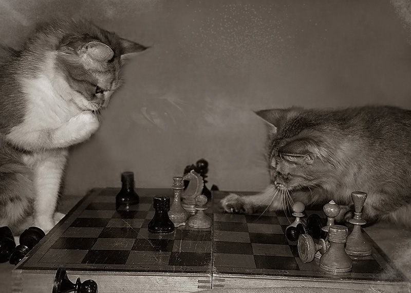 "фото ""шах!"" метки: юмор,"
