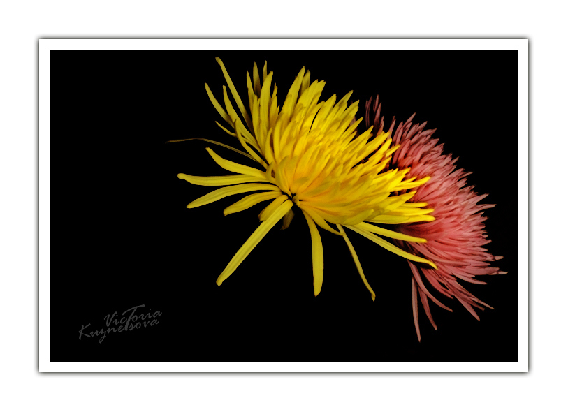 "photo ""Fireworks"" tags: nature, flowers"