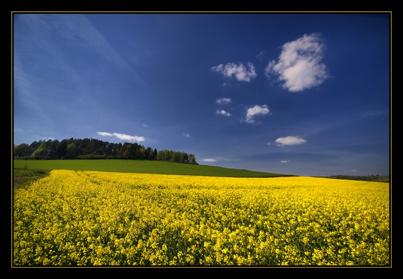 "photo ""golden fields..."" tags: landscape,"