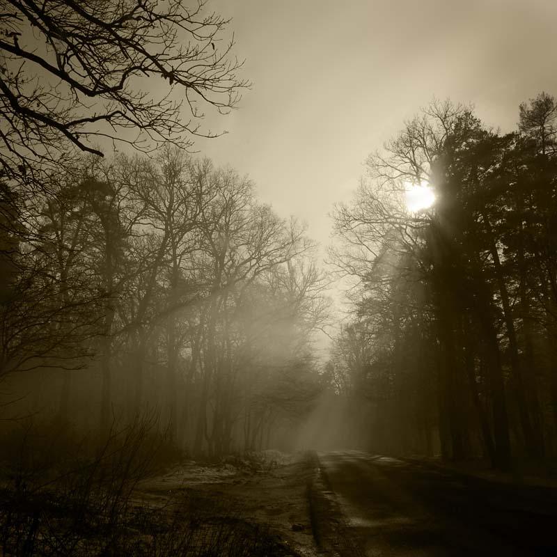 """photo """"***"""" tags: black&white, landscape, autumn"""