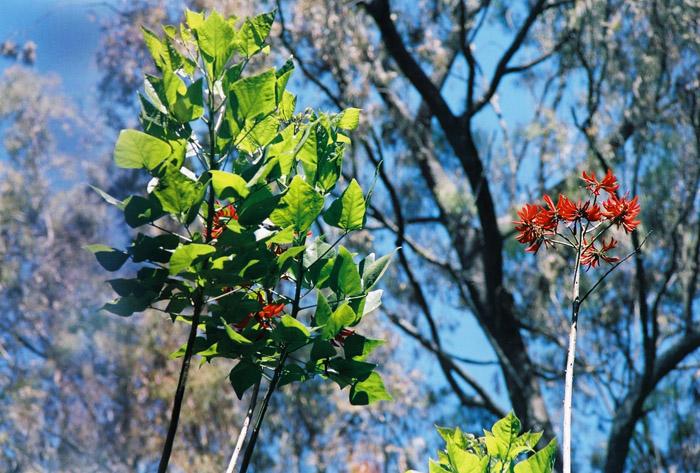 """фото """"this season in India!"""" метки: природа, цветы"""