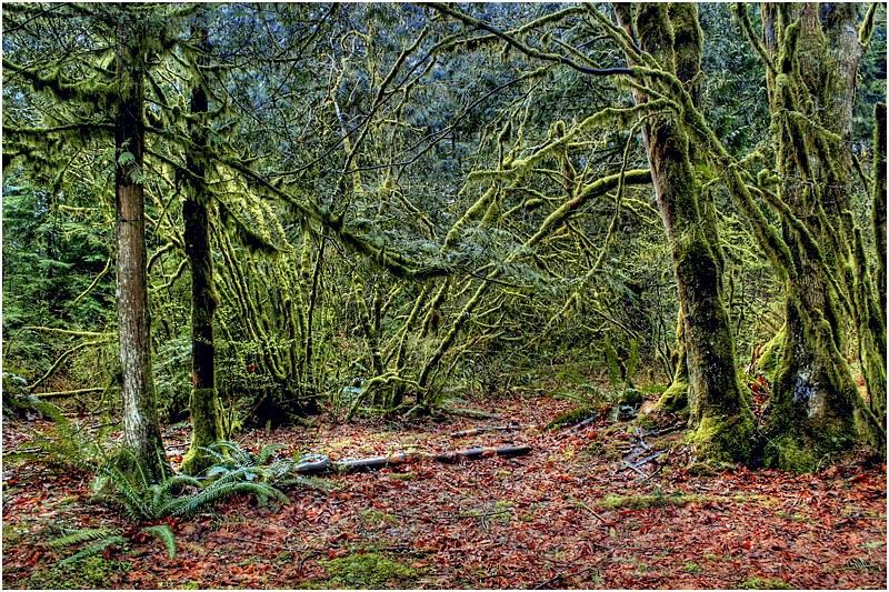 """фото """"*-*-*"""" метки: пейзаж, лес, осень"""