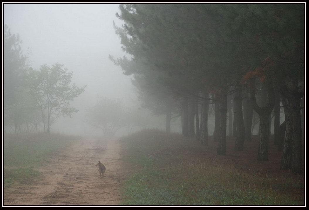 "photo ""***"" tags: nature, pets/farm animals"