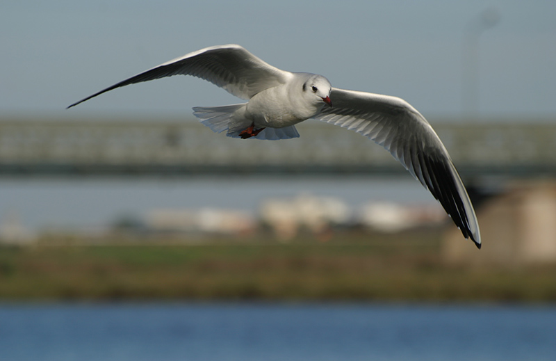 "photo ""Voando sobre Ofir"" tags: nature, wild animals"