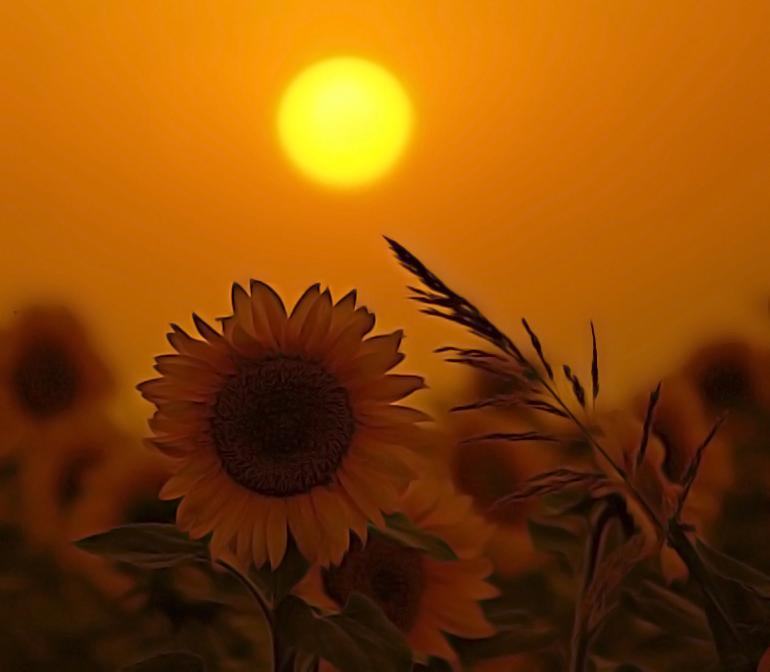 """фото """"солнечны круг ,небо вокруг ..."""" метки: пейзаж, закат"""