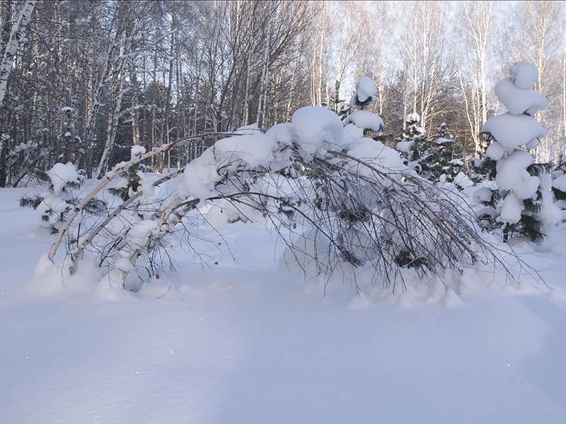 """фото """"Тяжесть зимы"""" метки: ,"""