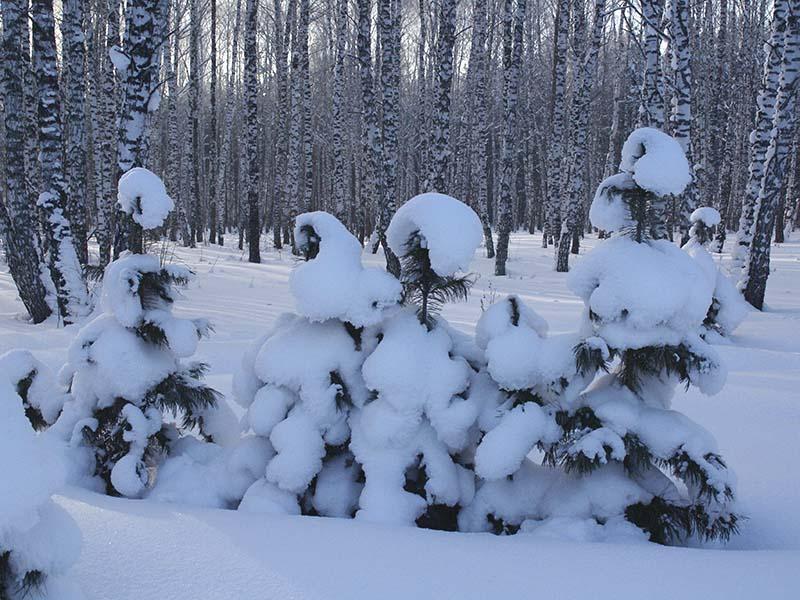 """фото """"В зимнем лесу"""" метки: ,"""
