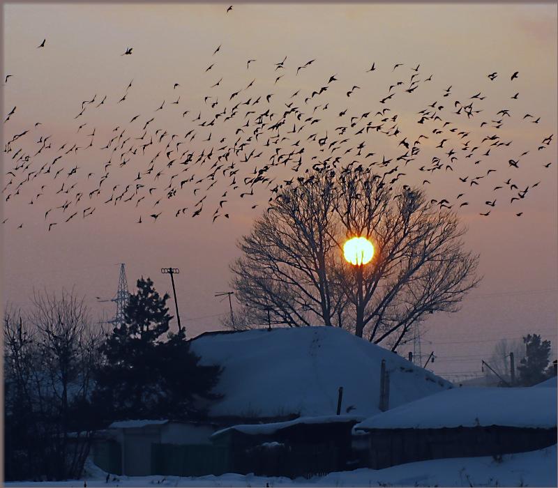 """фото """"В ожидание весны!"""" метки: пейзаж, закат, зима"""