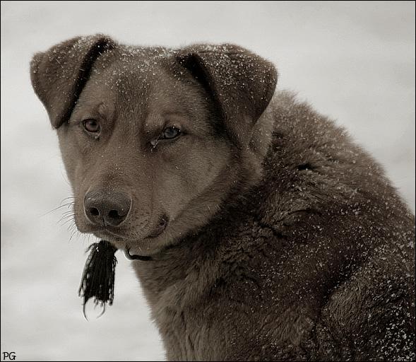 """фото """"собака друг человека."""" метки: природа, портрет,"""