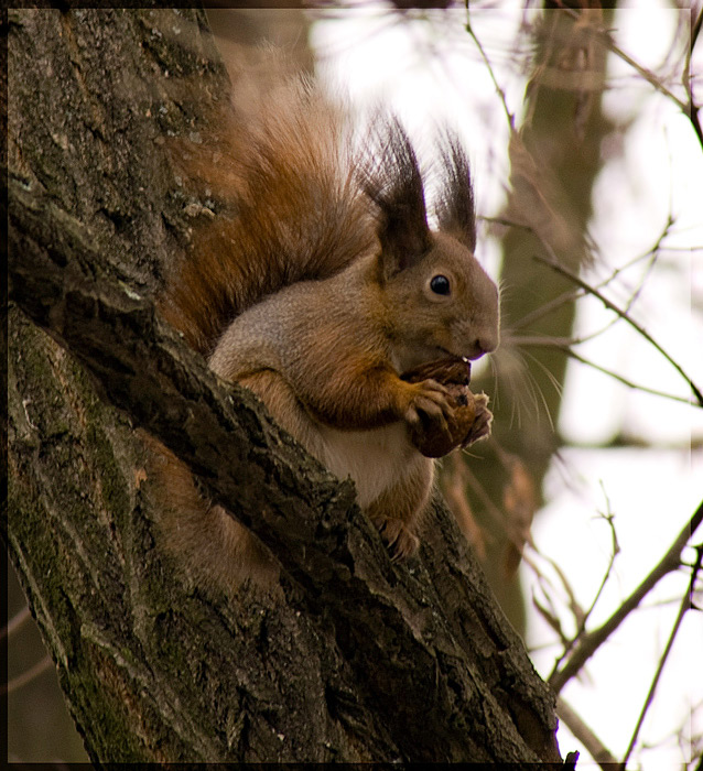 "photo ""squirrel"" tags: nature, wild animals"