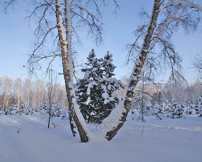 """фото """"Снежный февраль"""" метки: ,"""