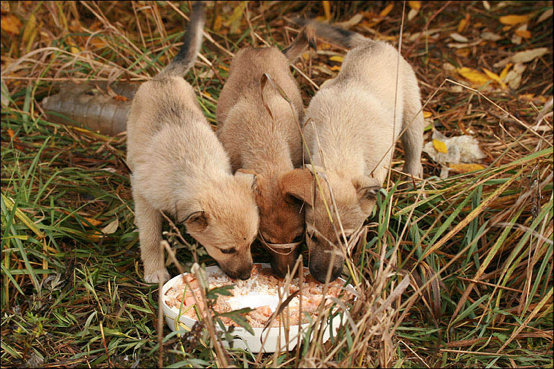 "photo ""Together."" tags: nature, genre, pets/farm animals"