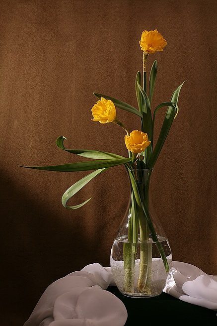 "photo ""Narcissus No.1"" tags: still life,"