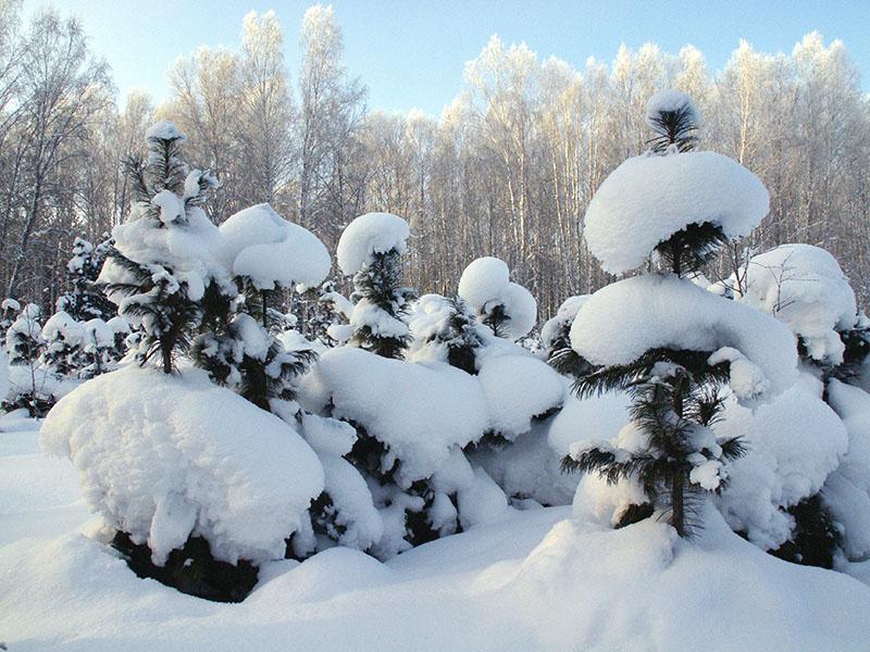 """фото """"Зима в Сибири"""" метки: ,"""