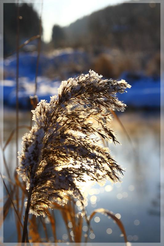 """фото """"Весна не за горами :)"""" метки: пейзаж, зима"""