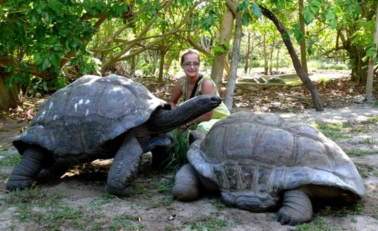 """фото """"Сейшельские черепахи. Все познается в ..... ;0)"""" метки: природа, дикие животные"""