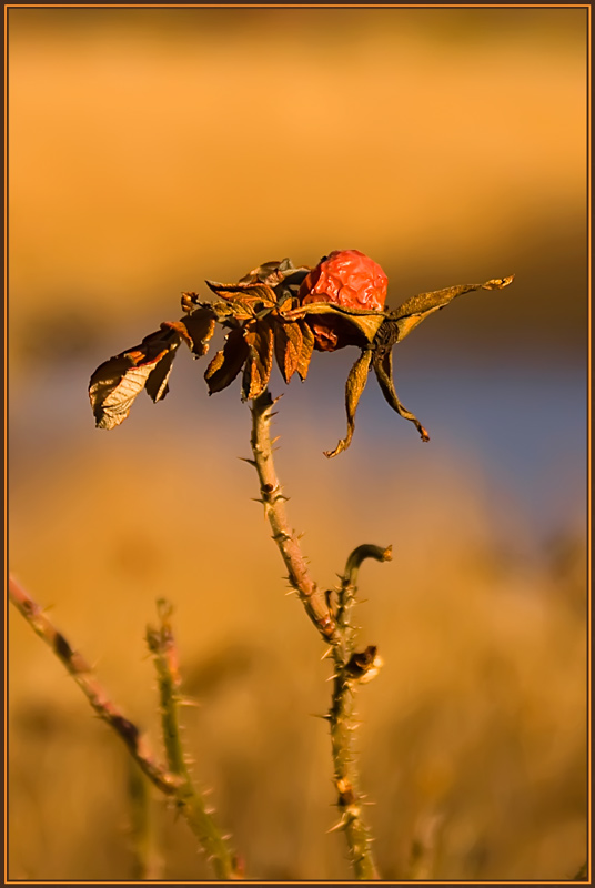 "photo ""Dying sun"" tags: nature, misc., flowers"