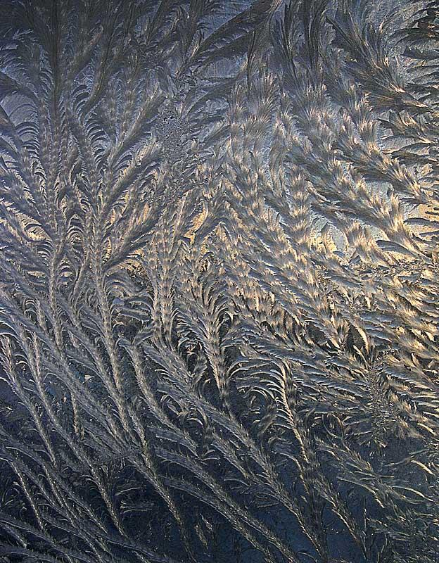 """фото """"Морозные узоры 2 -  """"Морские водоросли"""""""" метки: пейзаж, зима"""