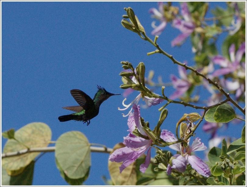 "photo ""Hummingbird (2)"" tags: nature, wild animals"