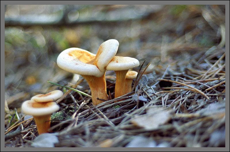 """photo """"Mushrooms"""" tags: nature, flowers"""