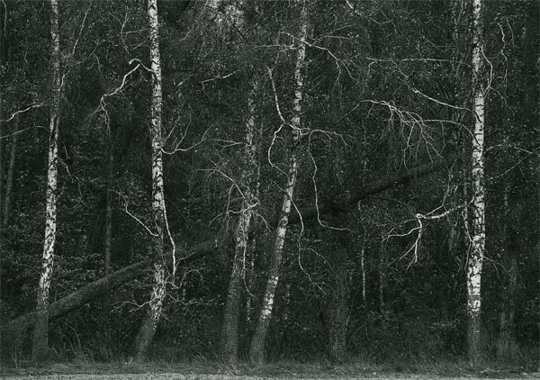 "фото ""Душа леса"" метки: пейзаж, лес"