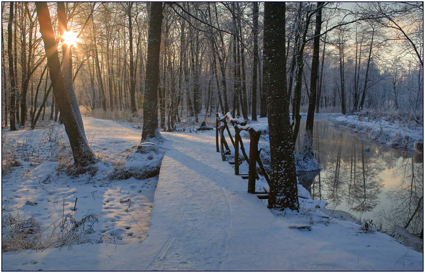 "photo ""The winter sun"" tags: landscape, forest, winter"