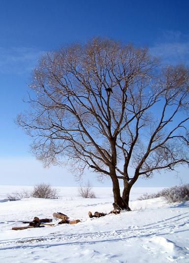 """фото """"Пейзаж с вороном"""" метки: пейзаж, зима"""